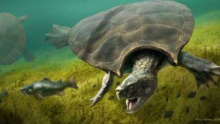 Schildpadfossielen ter grootte van een auto opgegraven