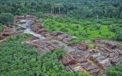 Soja, wegen en ontbossing