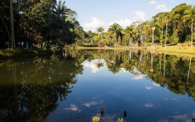 In Peru bewoonden inheemse volkeren het Amazonewoud op duurzame wijze
