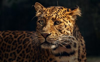 Illegale handel bedreigt 300 diersoorten in Peru