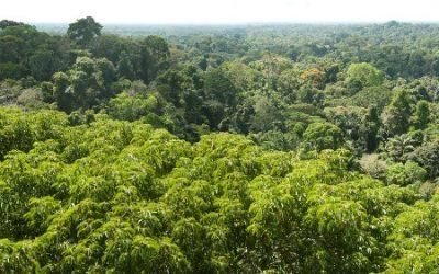 Amazoneregenwoud stoot in sommige gebieden meer koolstofdioxide uit dan het opneemt, stelt onderzoek